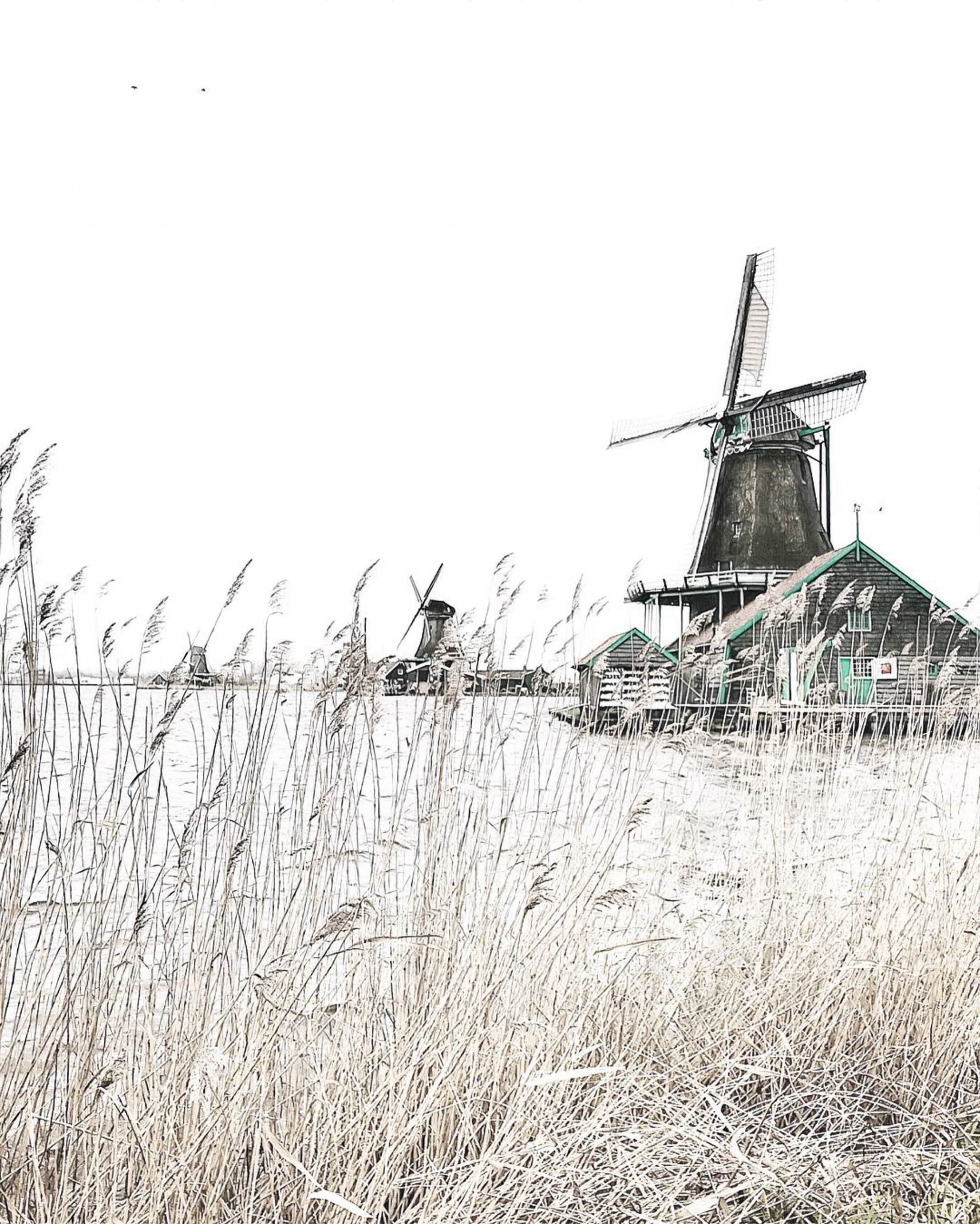A year in The Netherlands. Through the eyes of an expat.